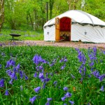 an 18ft yurt in a field of bluebells