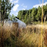 yurt in a overgrown field